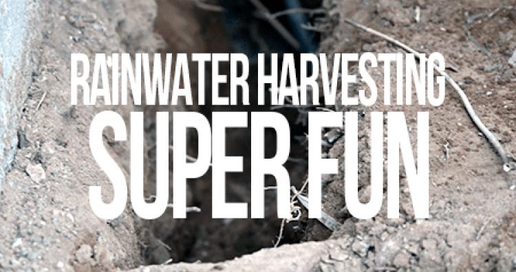 rainwater_super_fun_root.png