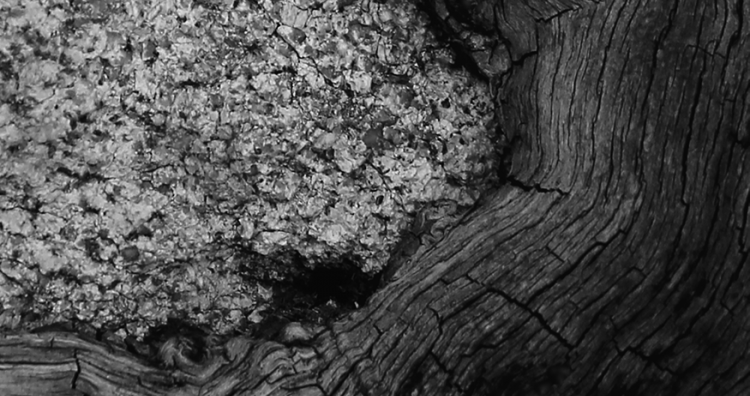 tree_whorl_stone